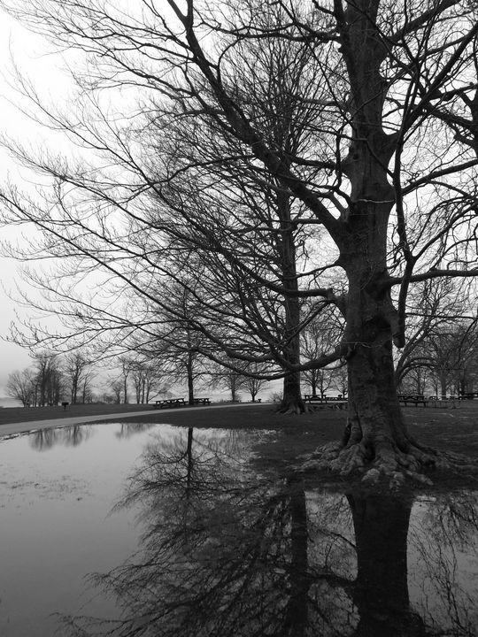 Trees in Winter -  Heatherback59
