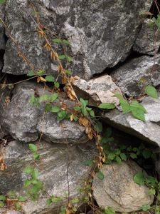 Rocks and Vines