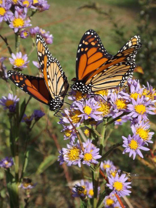 Fall Butterflies -  Heatherback59
