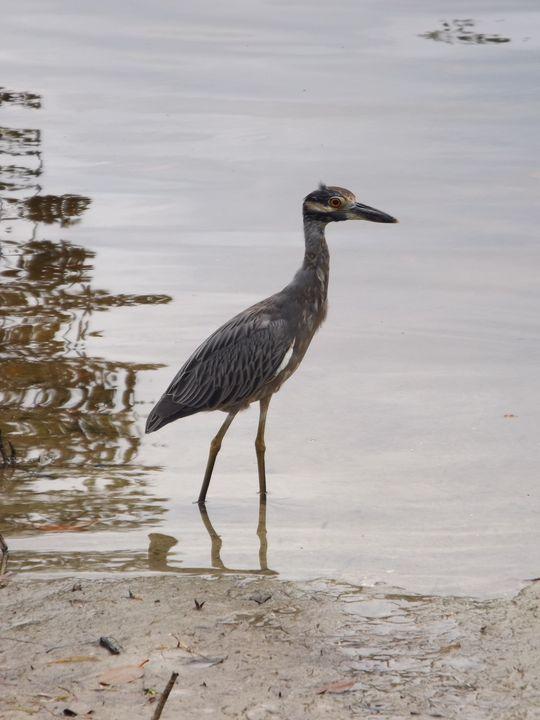 Sea Bird -  Heatherback59