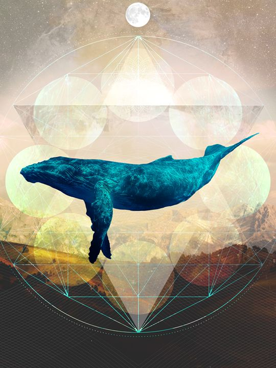 A Whale's Dream - Geometry In Nature