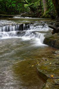 Paw Paw Creek 2