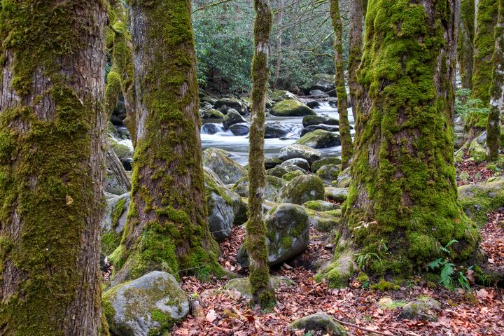 Moss Covered Trees - Perkins Designs