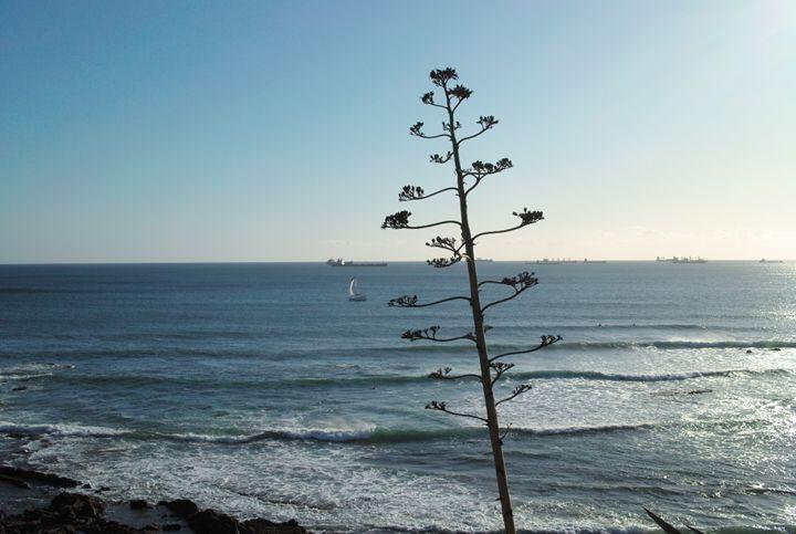 Ocean - Dream Light