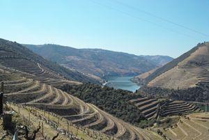 Vineyard, Douro region, Portugal - Dream Light