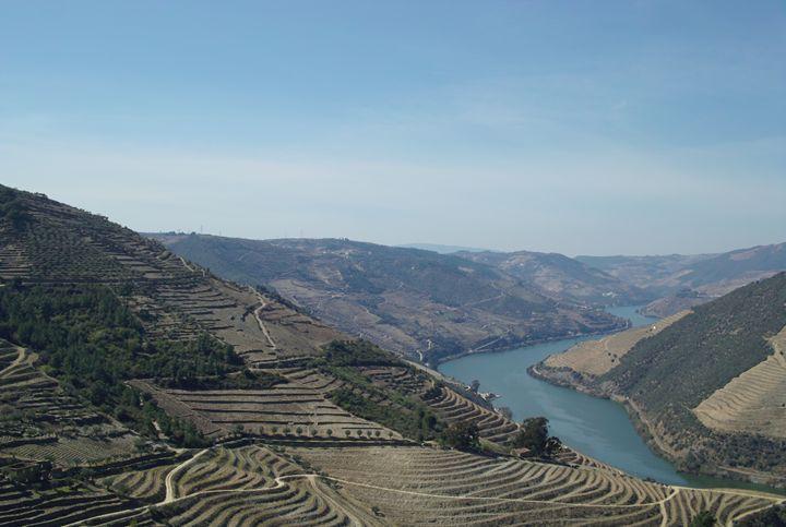 Douro valley vineyards, Douro river - Dream Light