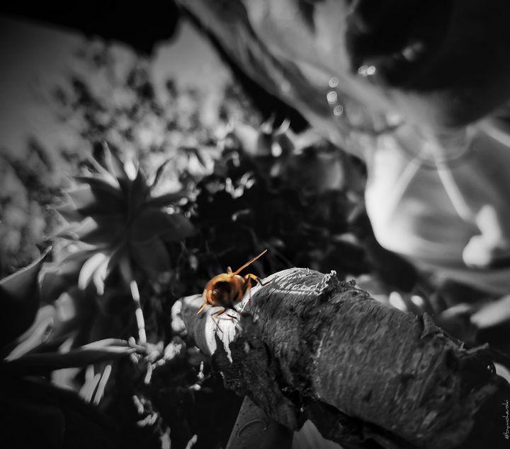 Kiss For A Bee ( B&W ) - #bymohenski - #bymohenski