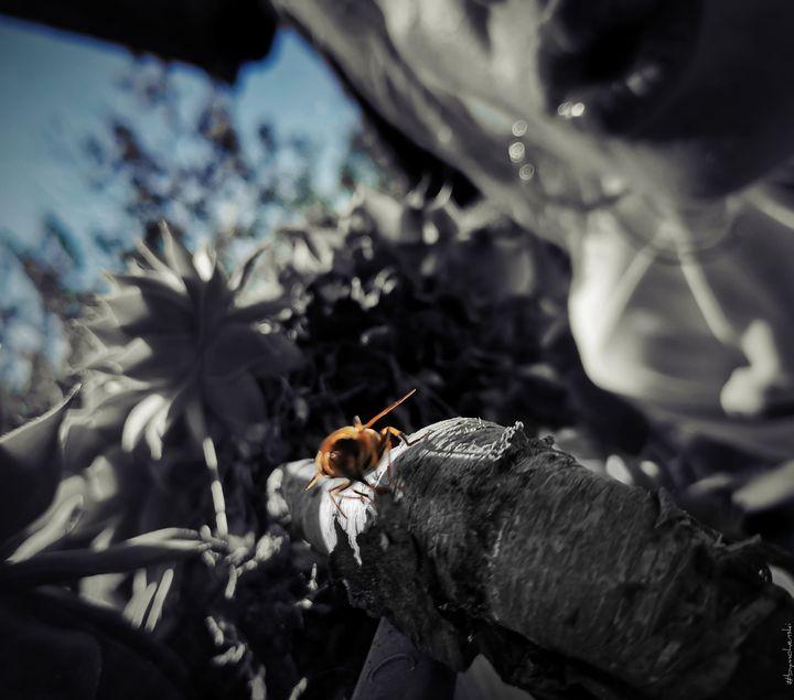 Kiss For a Bee (Blue) - #bymohenski - #bymohenski