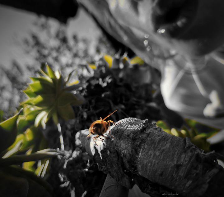 Kiss For a Bee (Green) - bymohenski - #bymohenski