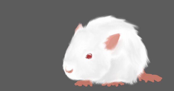 Albino Rat - DominikJT
