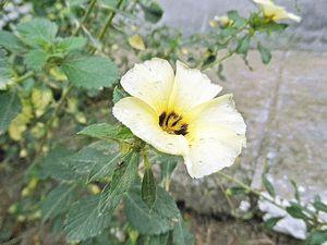 Simply flower