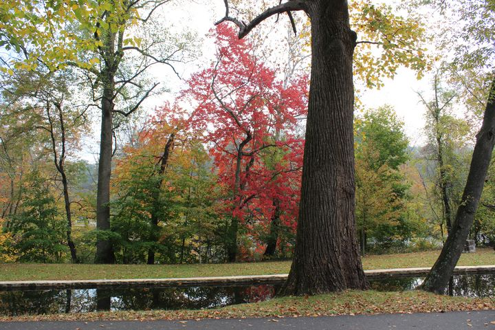 Fall at the Brandywine - Ivory Courts