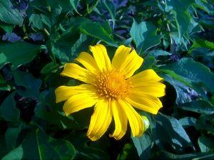 Yellow Under the Sun