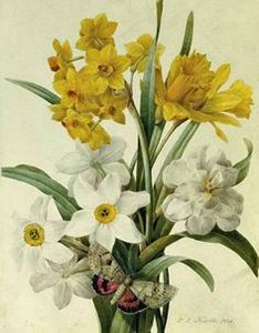 Narcissis w Butterfly - Wm Rease Design.com