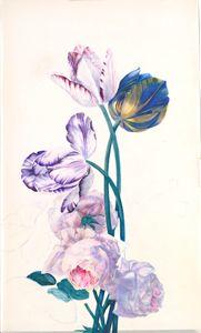 Rembrandt Tulips - Wm Rease Design.com