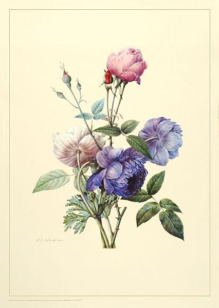 Blu Aster and Anemoes and rosebud - Wm Rease Design.com