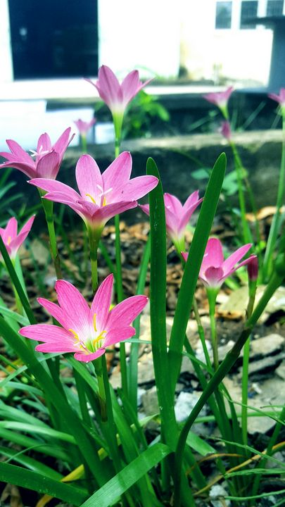 beautiful flowers in the garden - seven's flowers