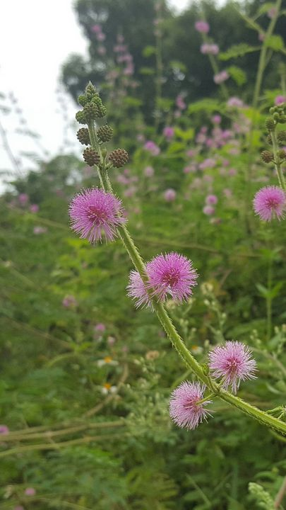 beautiful flowers near the lake - seven's flowers