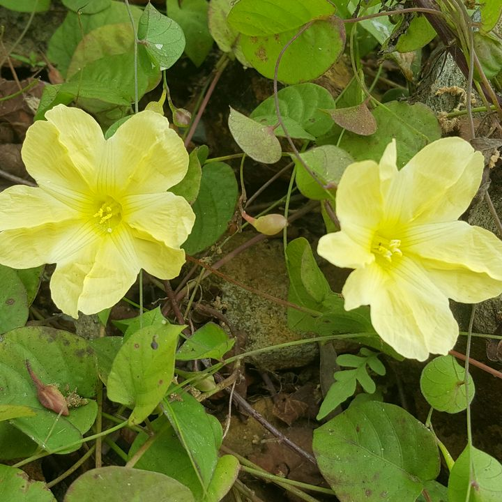 yellow flowers near the lake - seven's flowers