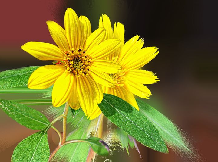 Yellow Flower - Barbee's Photography