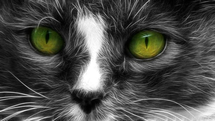 Cat Eyes - Barbee's Photography