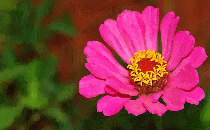 Pink Zinna - Barbee's Photography