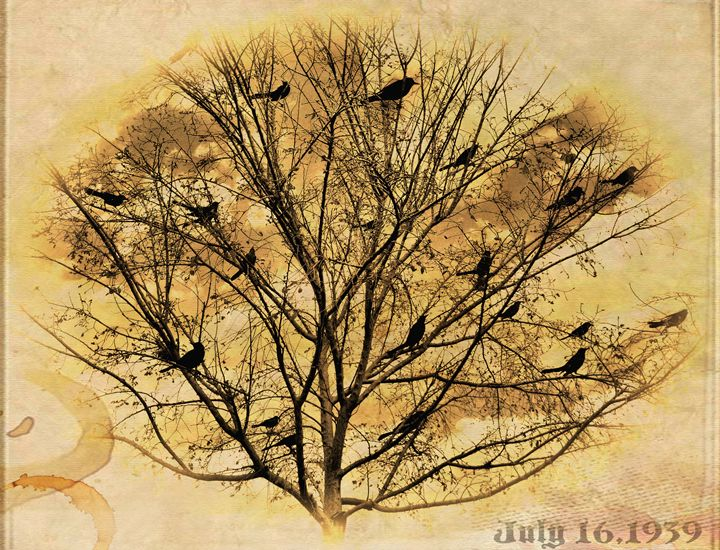 Black Birds In a Tree - Barbee's Photography