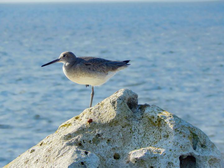 Bird Balanced on Rocks - Barbee's Photography