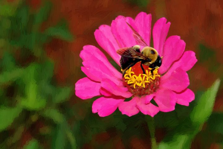 Bee Getting Honey on a Flower - Barbee's Photography