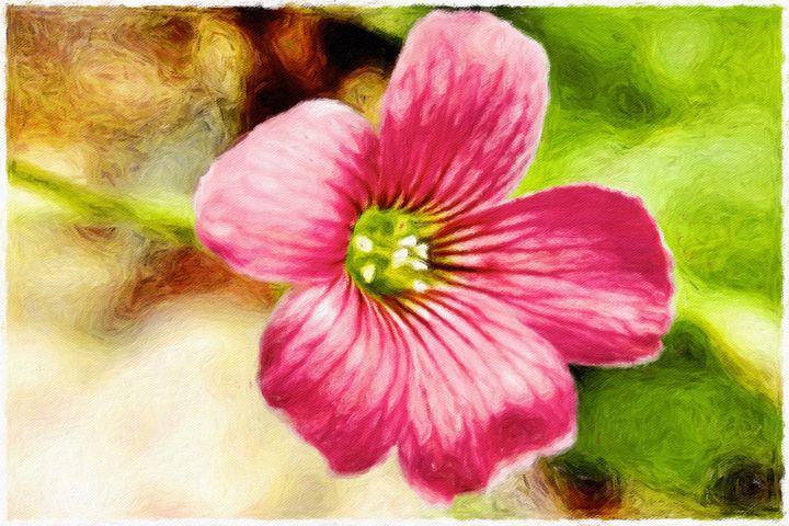 Pink Flower - Barbee's Photography