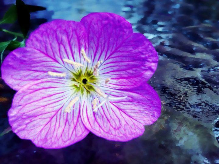 Purple Flower - Barbee's Photography