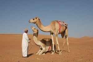 Standing Camel - Aaron Harlan