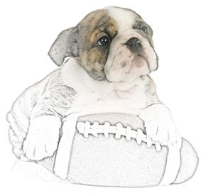 English Bulldog Puppy - Animal Art