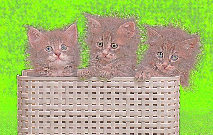 Kittens - Animal Art
