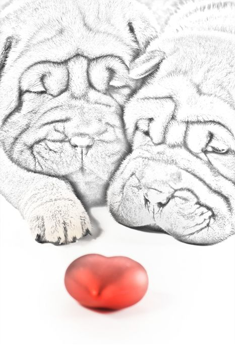 Shar Pei Love - Animal Art