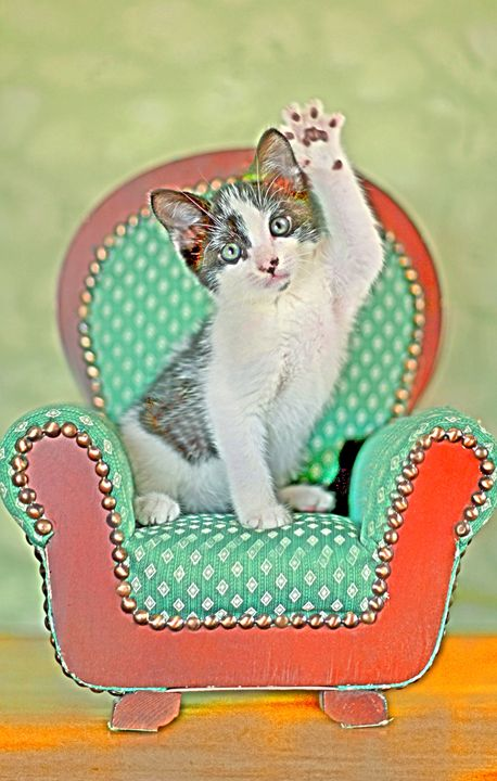 Kitten in Chair - Animal Art