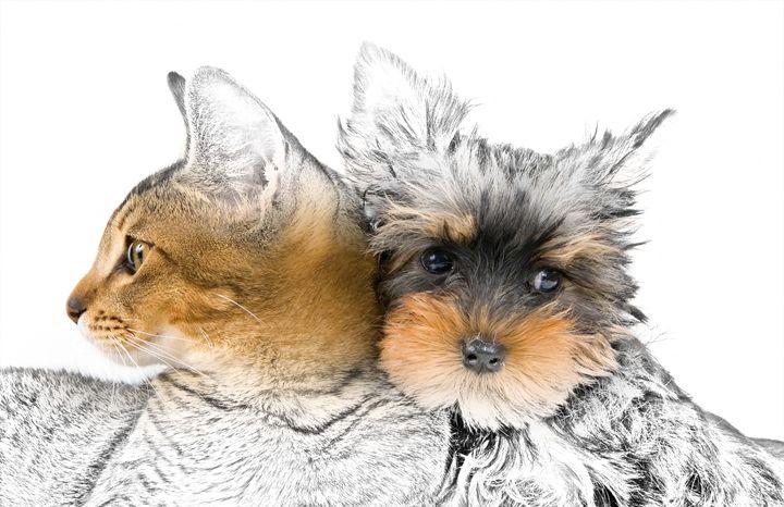 Cat and Dog - Animal Art