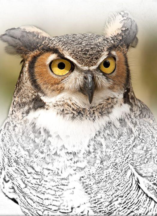 OWL - Animal Art