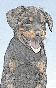 Rottweiler Puppy - Animal Art