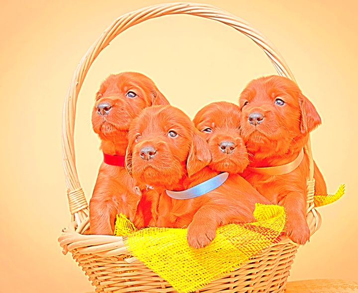 Puppies - Animal Art
