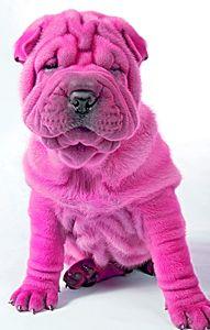 Pink Dog - Animal Art