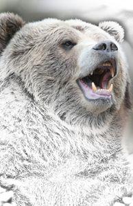 Bear - Animal Art