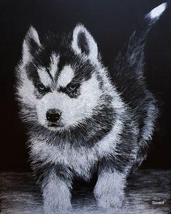 Cute Siberian Husky Furbaby