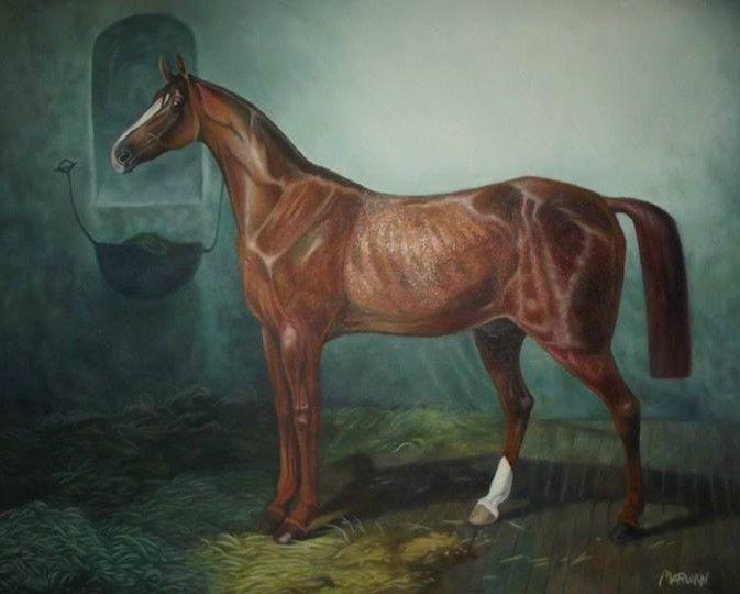 Romantic horse - Marwan gamal