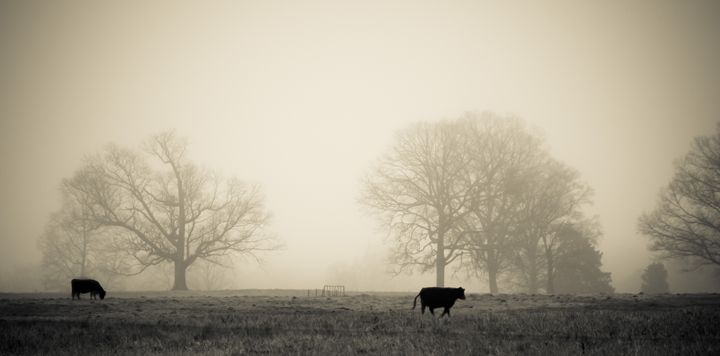 Foggy Morning - H Wesley Phillips