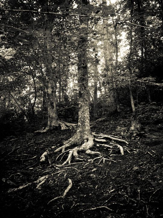 Roots - H Wesley Phillips