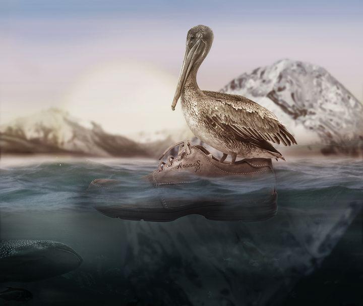 Pelican Shoe Water Adventure - Seth Parr - EleGenius