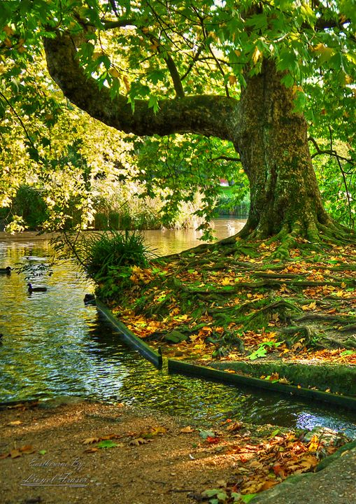 Autumn In The Park - Lionel Fraser, Pictures of Eastbourne, England