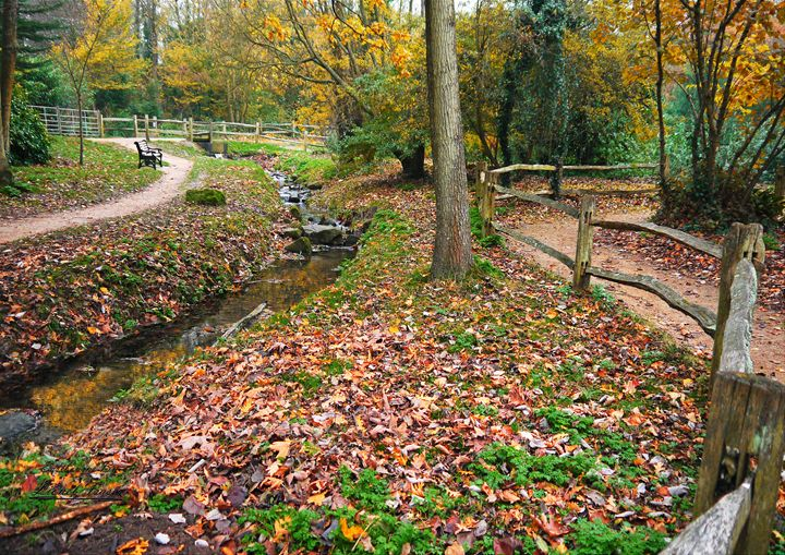Autumn Leaves in the Park - Lionel Fraser, Pictures of Eastbourne, England