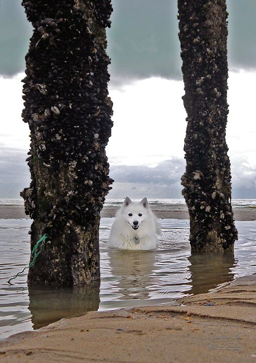 Playful White Fluffy Dog In Water - Lionel Fraser, Pictures of Eastbourne, England